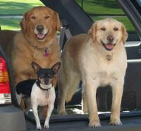 Three Dogs Snoring Pet Sitting & Care Services; Pet Sitter for Dogs, Cats, and any other animal