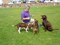 Dog Walking Pet Care Services Bexhill