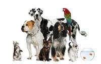 Laura's Critter Care | Pet sitting services