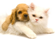 Nationwide Pet Sitting Services